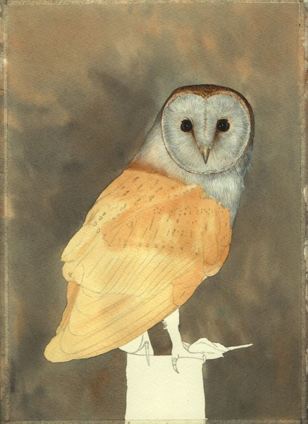 Step-by-step PDF guide on painting owls in watercolour, stage 2