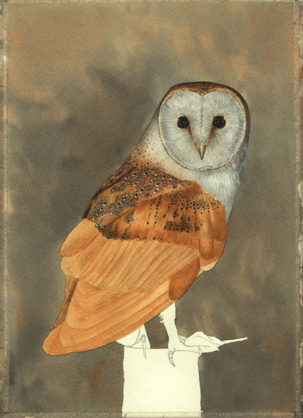 Step-by-step PDF guide on painting owls in watercolour, stage 3