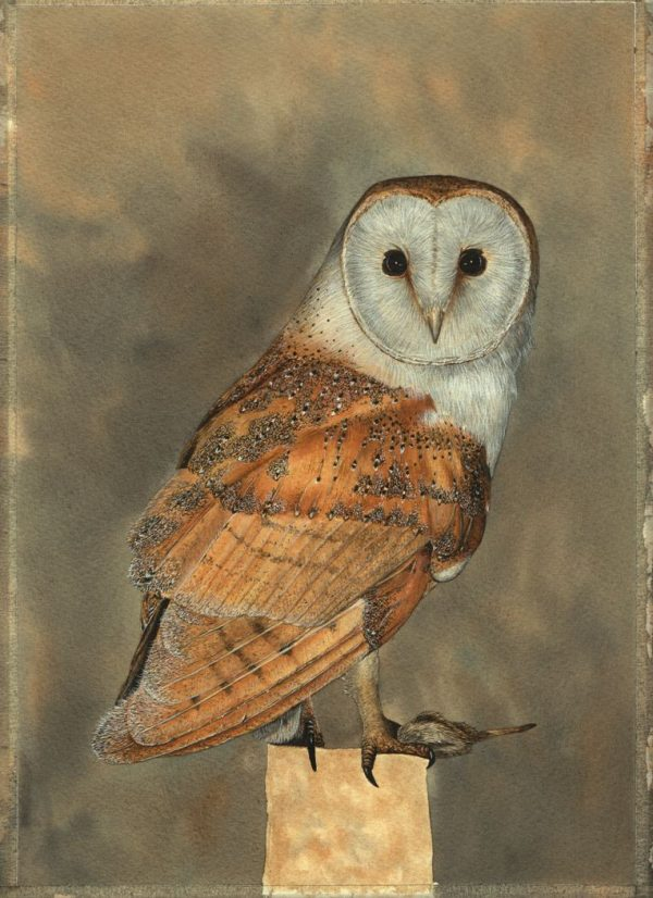 Step-by-step PDF guide on painting owls in watercolour, stage 4
