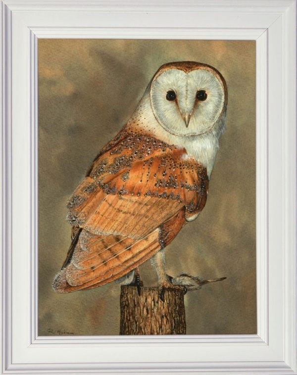 Watercolour barn owl painting in a white frame