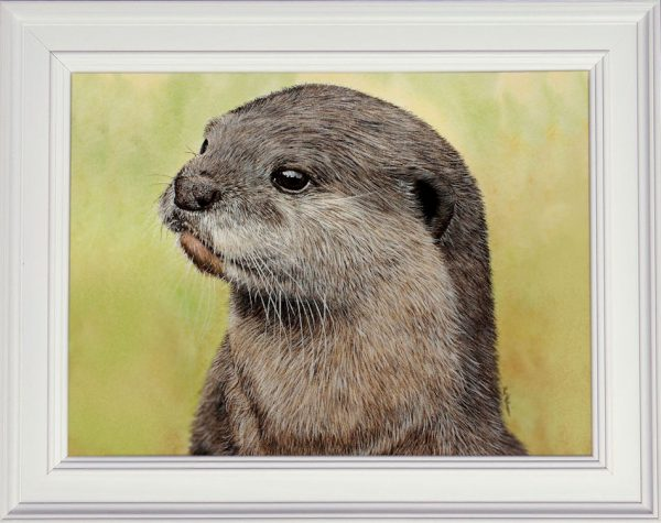 Watercolour painting of an Asian otter shown framed