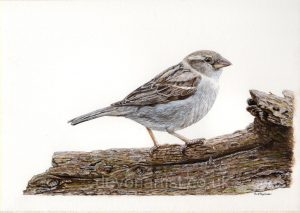 How to Paint a Bird in Watercolour in this Sparrow Tutorial