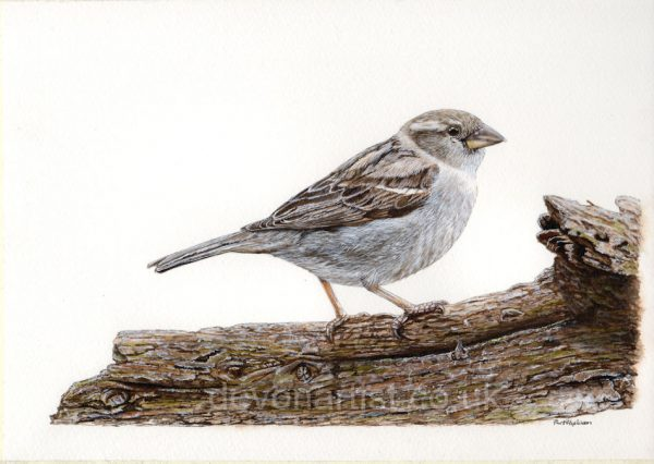 Sparrow watercolour painting tutorial by Paul Hopkinson