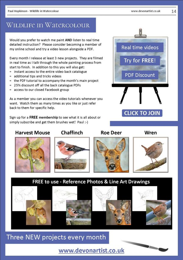 Watercolour wildlife painting lessons