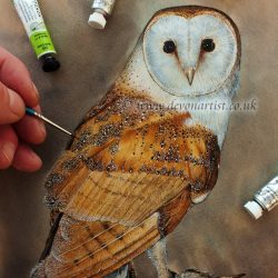 How to paint a barn owl in easy steps using watercolour