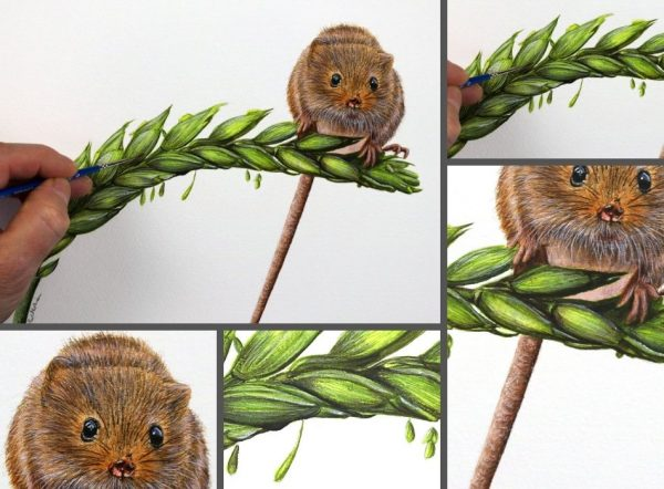 Close up photos of a harvest mouse watercolor painting by Paul Hopkinson