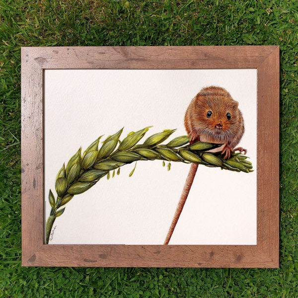 Framed realistic watercolor cute mouse painting by Paul Hopkinson