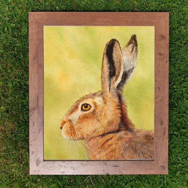 Framed realistic watercolor hare painting by Paul Hopkinson