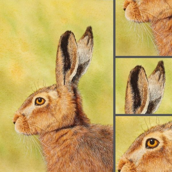 Close up detail of a hare painted in watercolor by Paul Hopkinson
