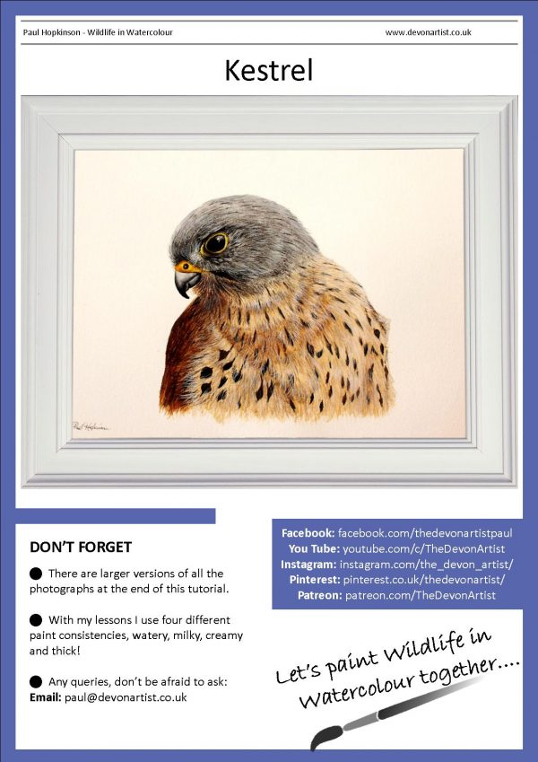 PDF watercolour lesson on how to paint realistic birds