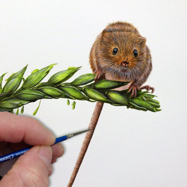 Paul Hopkinson painting a realistic harvest mouse in watercolour