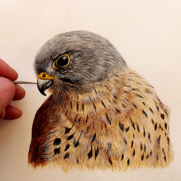 Paul Hopkinson painting a watercolour kestrel bird