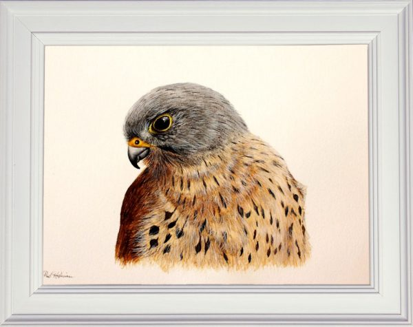 Watercolor kestrel painting displayed in a white frame