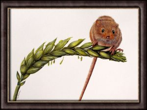 Original Wildlife Watercolour Painting of a Harvest Mouse