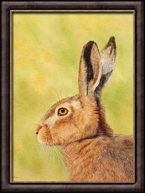 Watercolor painting of a hare by Paul Hopkinson framed