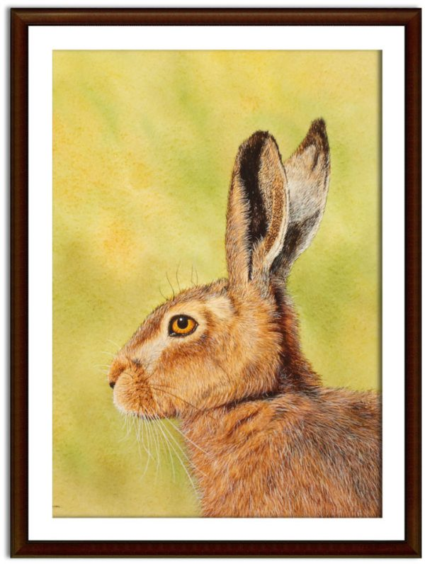 Watercolor painting of a hare by Paul Hopkinson mounted and framed