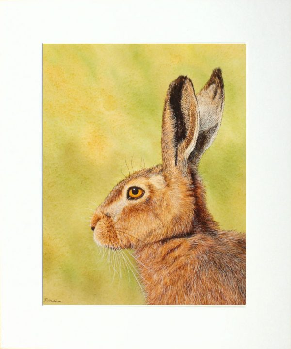 Watercolour painting of a hare by Paul Hopkinson in a neutral mount