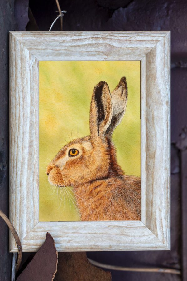 Watercolour painting of a hare by Paul Hopkinson in a rustic frame