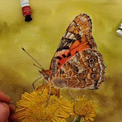 Original butterfly watercolour painting