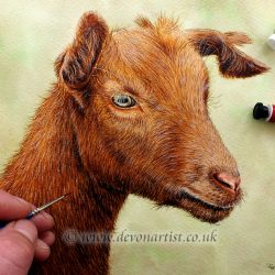 Watercolour Painting Farm Animal, Original Goat Portrait