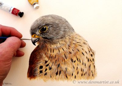 Step by step PDF tutorial on painting a kestrel in watercolour