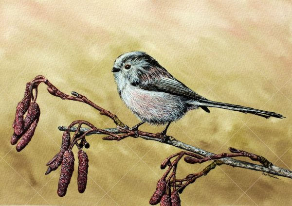 Garden bird in watercolour by Paul Hopkinson