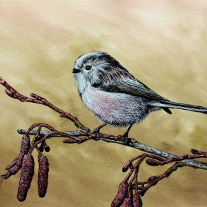 Paul Hopkinson painting a long tailed tit in watercolour