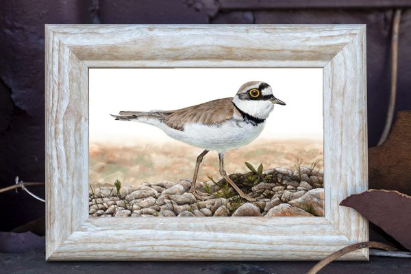 Watercolour painting of a plover bird by Paul Hopkinson shown in a rustic frame