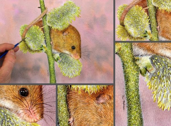 Close up photos of a mouse watercolor painting by Paul Hopkinson