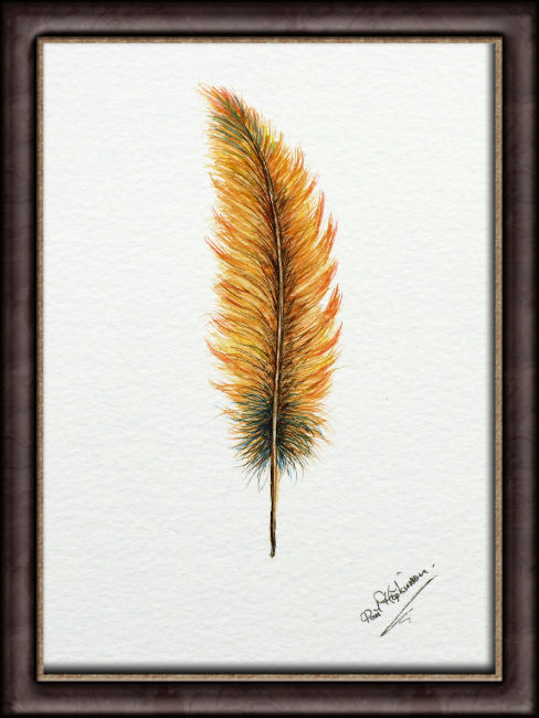 Framed original watercolour feather painting
