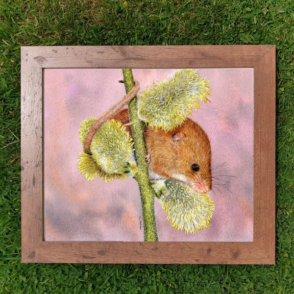 Framed watercolor cute mouse illustration by Paul Hopkinson