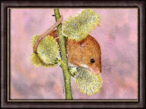 How to Paint Fur Realistically in Watercolour - Harvest Mouse PDF