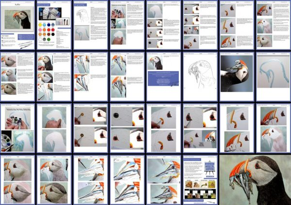 Overview image of a PDF watercolour tutorial on painting a puffin bird