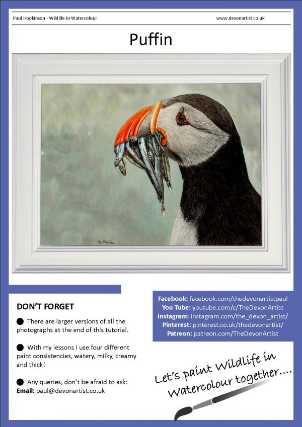 PDF warercolor painting tutorial for a puffin bird illustration