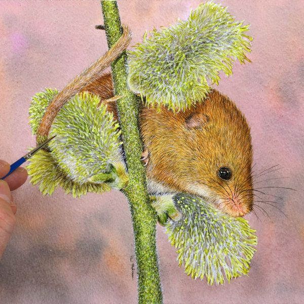 Paul Hopkinson painting a harvest mouse illustration in watercolour