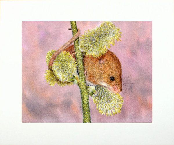 Paul Hopkinson wildlife artist and online art tutor, watercolour mouse painting