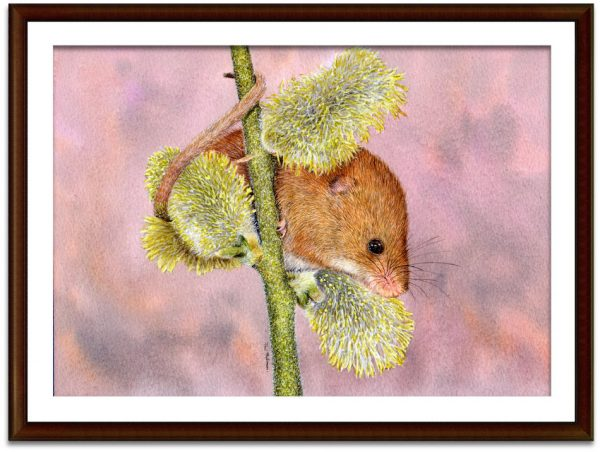 Watercolor harvest mouse painting by Paul Hopkinson, shown framed