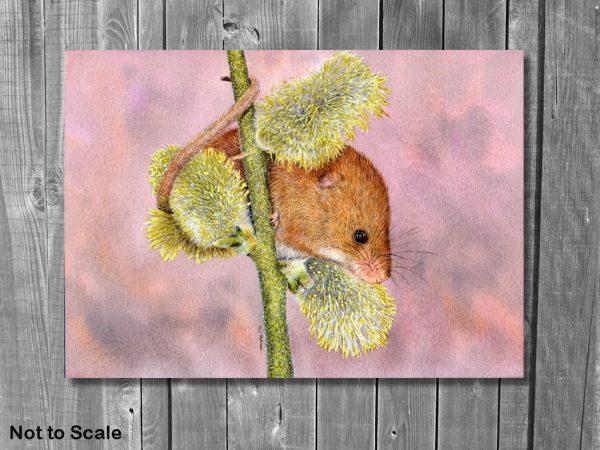 Watercolor wildlife artist Paul Hopkinson, displayed mouse painting