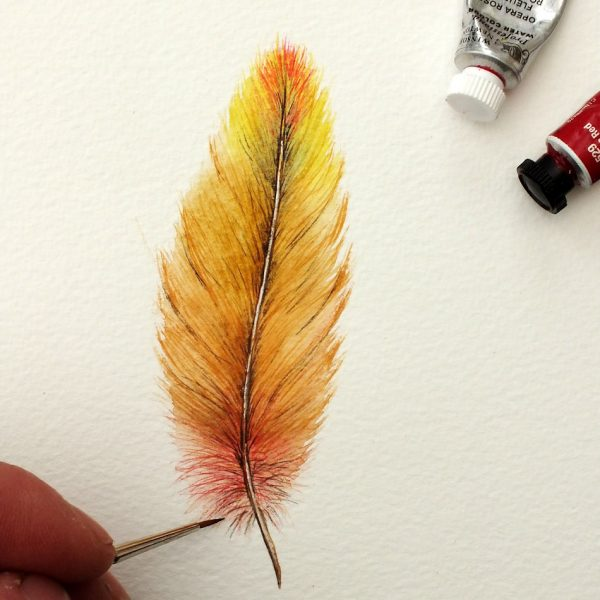 Watercolour feather painted in fine detail
