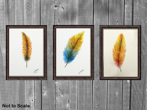 Watercolour feather paintings displayed framed on wall