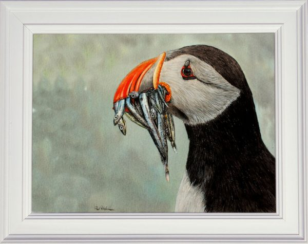 Watercolour puffin painting displayed in a white frame