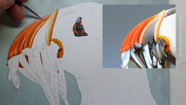 Work-in-progress photos of a watercolour puffin painting, stage 2