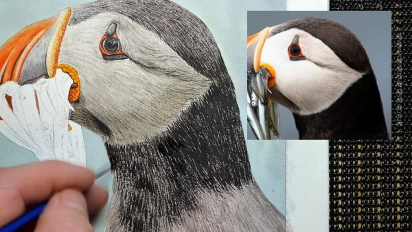 Work-in-progress photos of a watercolour puffin painting, stage 3