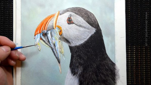 Work-in-progress photos of a watercolour puffin painting, stage 4