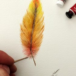 Original watercolour painting of a colourful feather by Paul Hopkinson