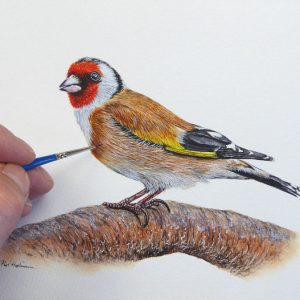 Paul Hopkinson painting a goldfinch in watercolour