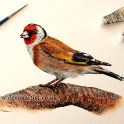 Original watercolour painting of a goldfinch by Paul Hopkinson