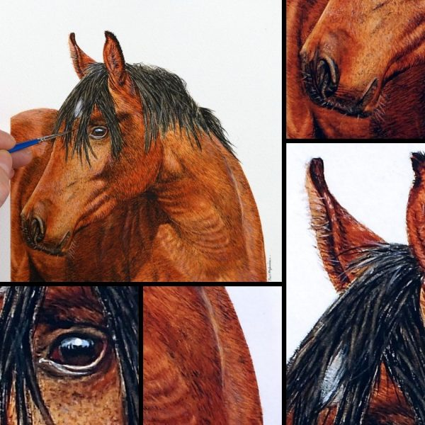 Close up photos of a horse watercolour portrait