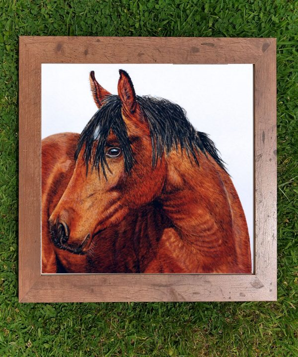 Framed watercolor horse illustration by Paul Hopkinson