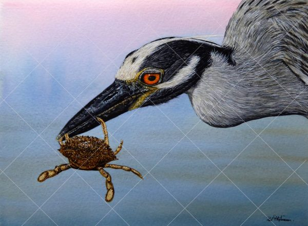 Heron painted in realistic watercolour by Paul Hopkinson